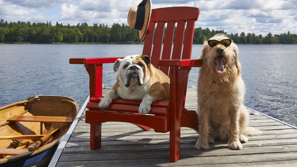dogs_on_vacay