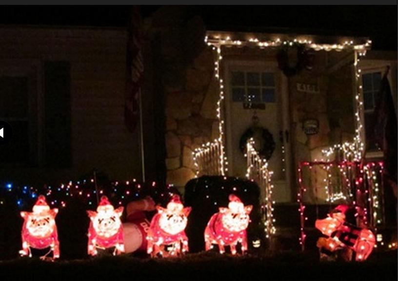 Świąteczne świnki