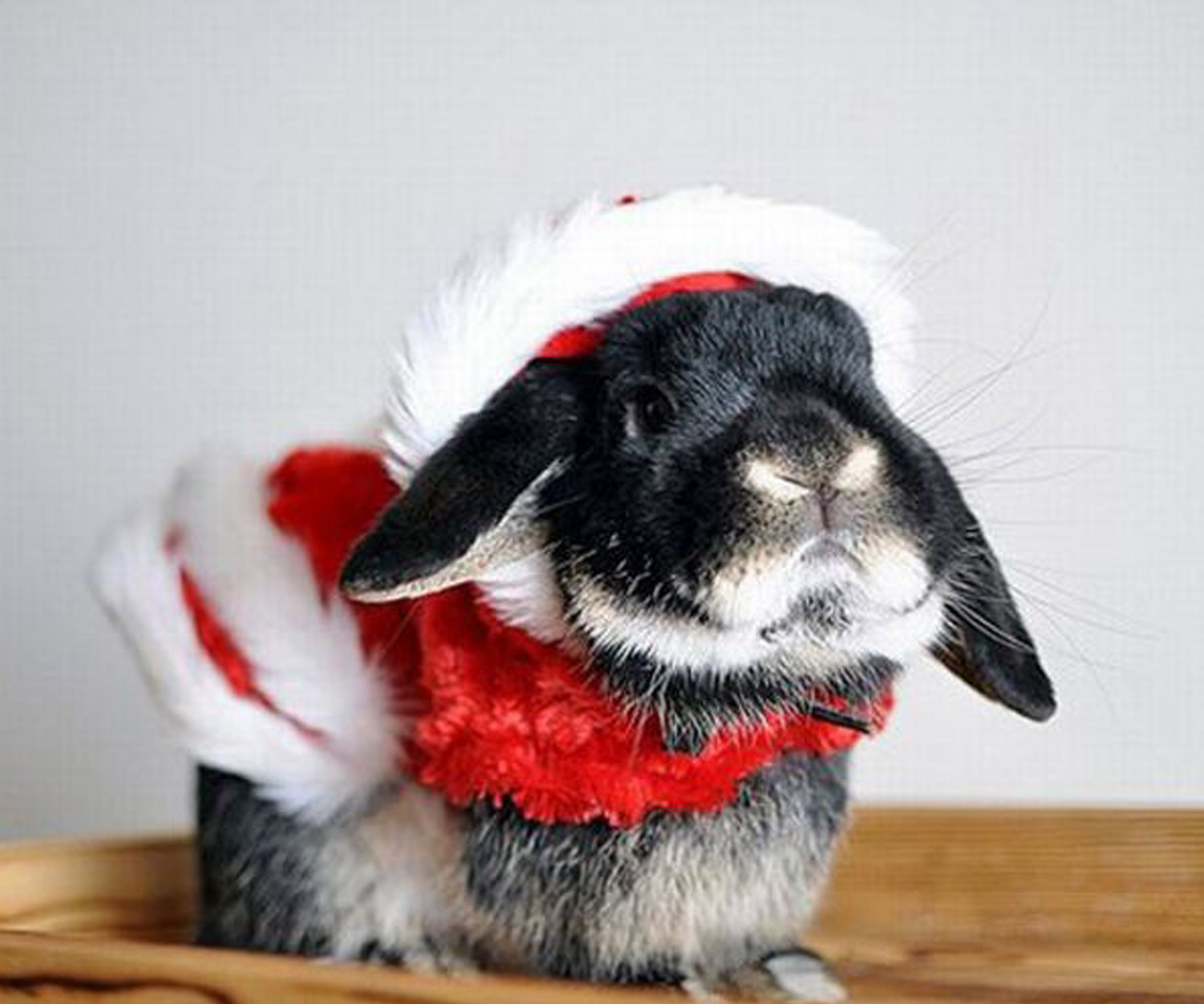 Animals-in-Christmas-costumes-art