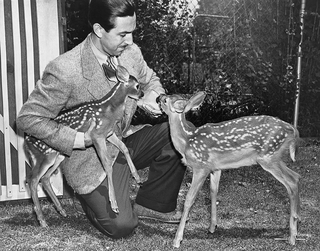 Rok 1942- Żywe sarenki były użyte jako źródło inspiracji dla rysowników podczas produkcji filmu Bambi