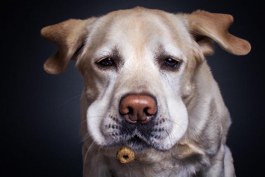 funny-dogs-catching-food-fotos-frei-schnauze-christian-vieler-13