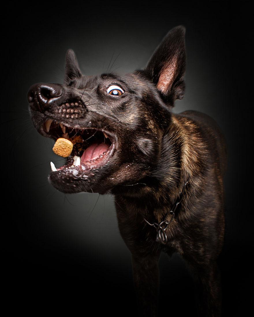 funny-dogs-catching-food-fotos-frei-schnauze-christian-vieler-21