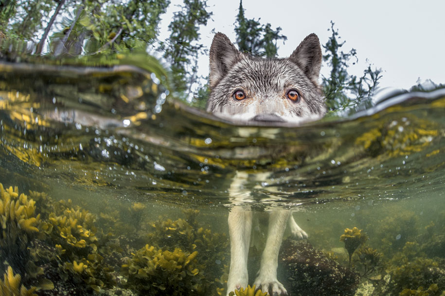 internet-favorite-picture-of-day-2015-national-geographic-20