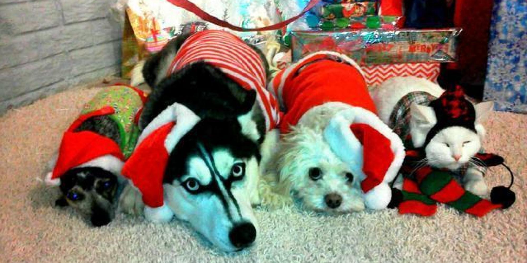 o-DOG-CHRISTMAS-facebook
