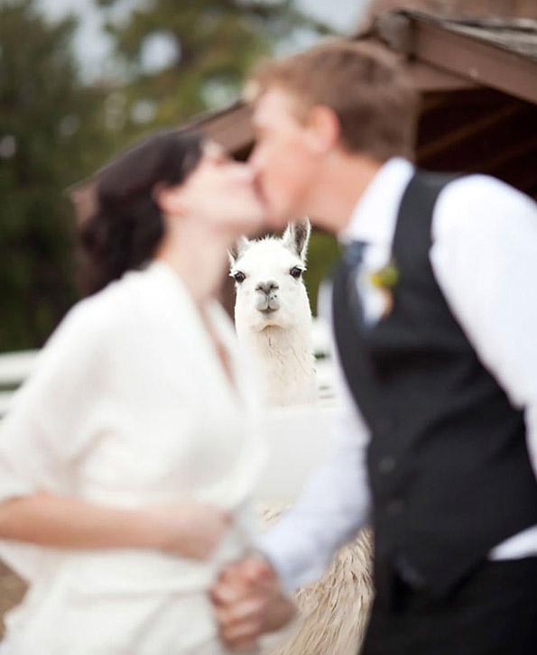wedding-witness
