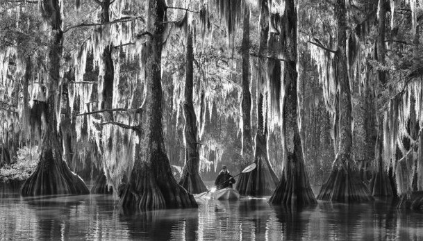 Marsel van Oosten/Luiziana,USA