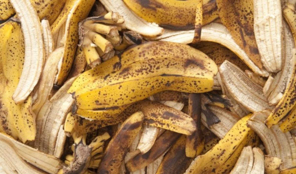 bananas-e1373307893191