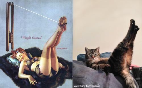 catsthatlooklikepinupgirls.tumblr.com