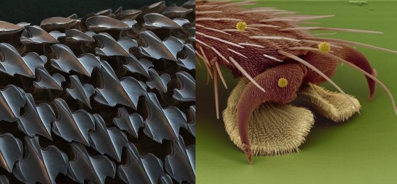 Skóra rekina (lewa) i stopa muchy (prawa)