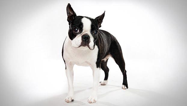 13 ras psów do życia w mieście