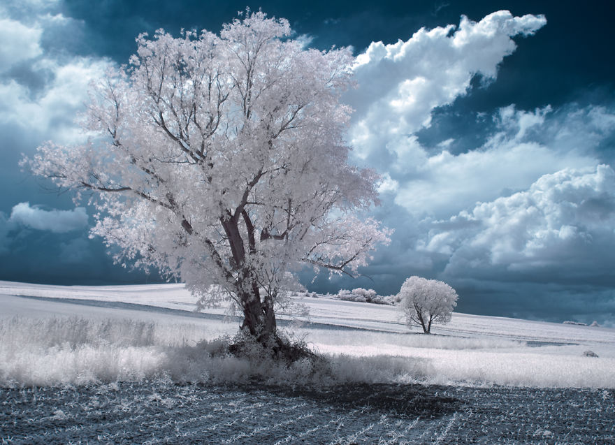 the-majestic-beauty-of-trees-captured-in-infrared-photography-11__880
