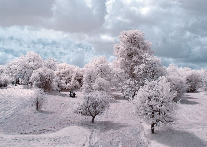 the-majestic-beauty-of-trees-captured-in-infrared-photography-3__880