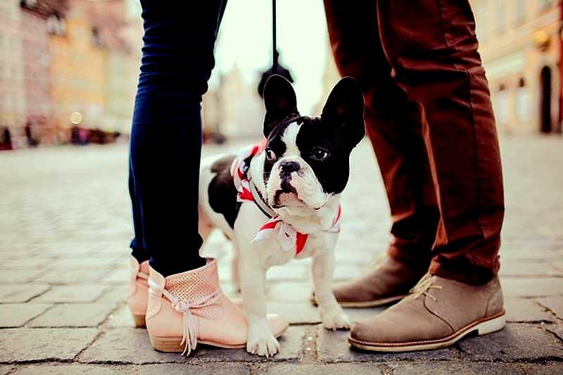 Posiadanie zwierzęcia, wpływa na życie miłosne