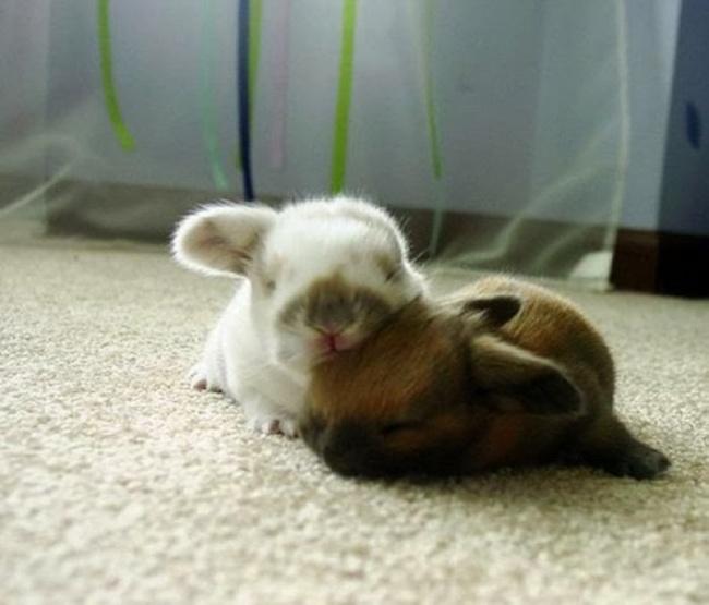 1077305-650-1459754474-cute_animals_sleeping_pillows_26_1