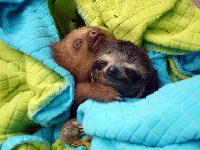 1077655-650-1459754474-loving-animals-using-each-other-as-pillows-my-heart-has-melted-completely-3