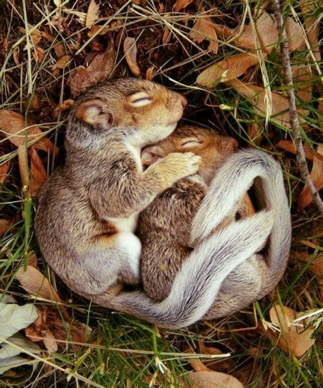 1078655-650-1459754474-sleeping_baby_squirrels