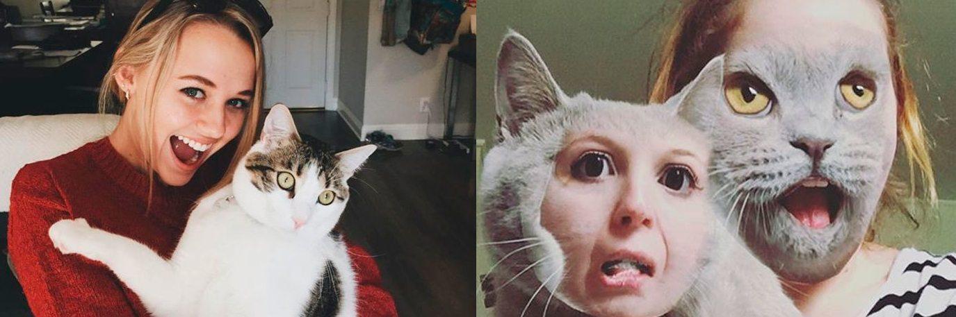 życie kotów