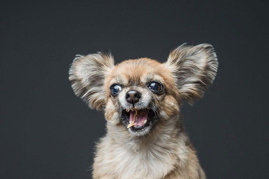 Sesja zdjęciowa psów
