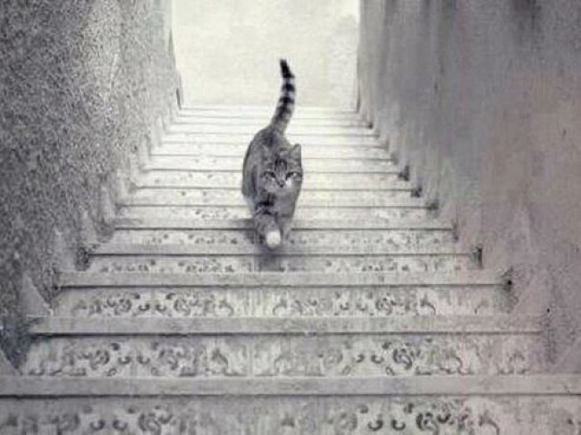 Is this cat going up, or down the staircase