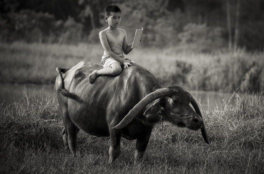 Chłopiec jeżdżący na bawole, jednocześnie czytający książkę. Jaka jest twoja wymówka?!