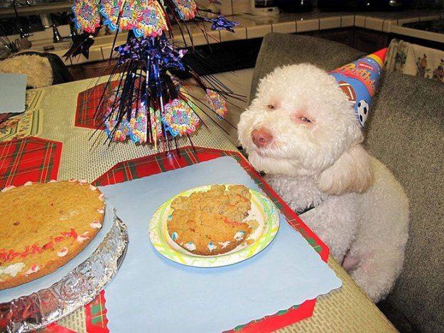 Urodzinowe przyjęcie zwierząt