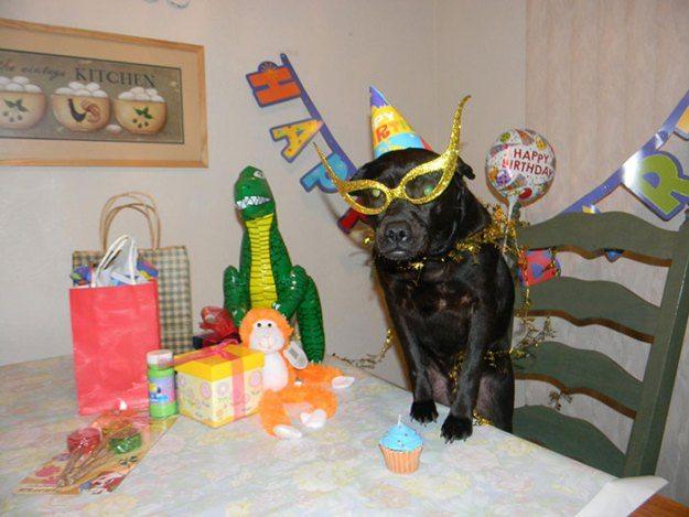 Zwierzęta i ich przyjęcie urodzinowe