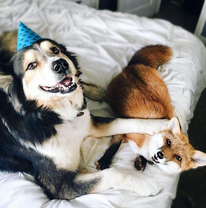 ten pies i lis to najlepsi przyjaciele
