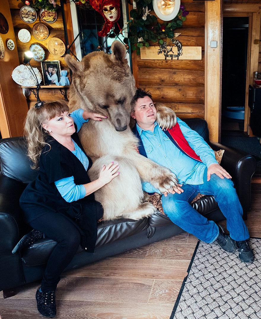 adopcja niedźwiedzia