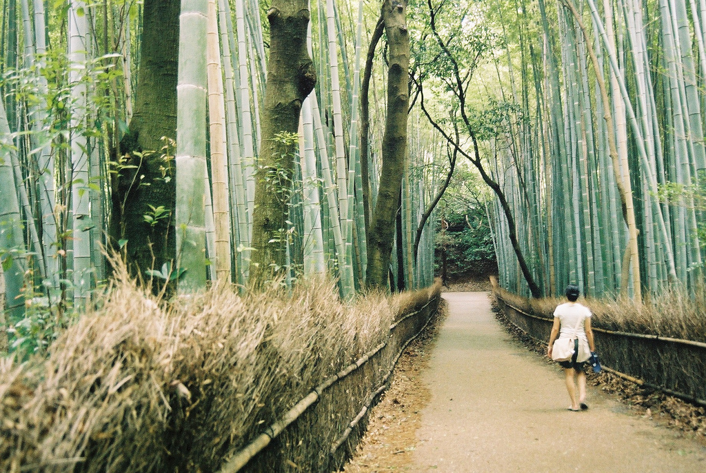 dlaczego warto odwiedzić Japonię