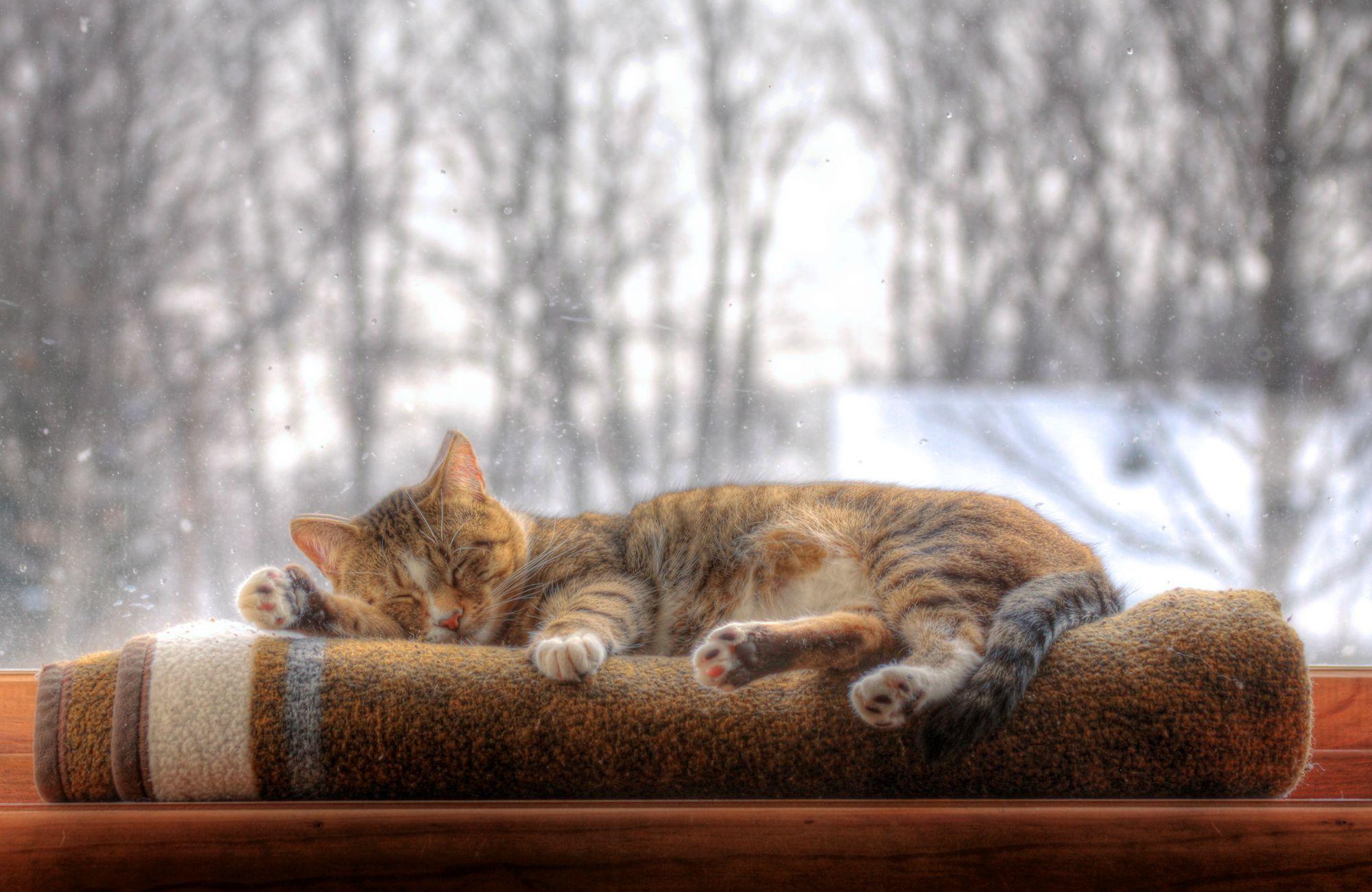 jak przygotować dom na przygarnięcie kota