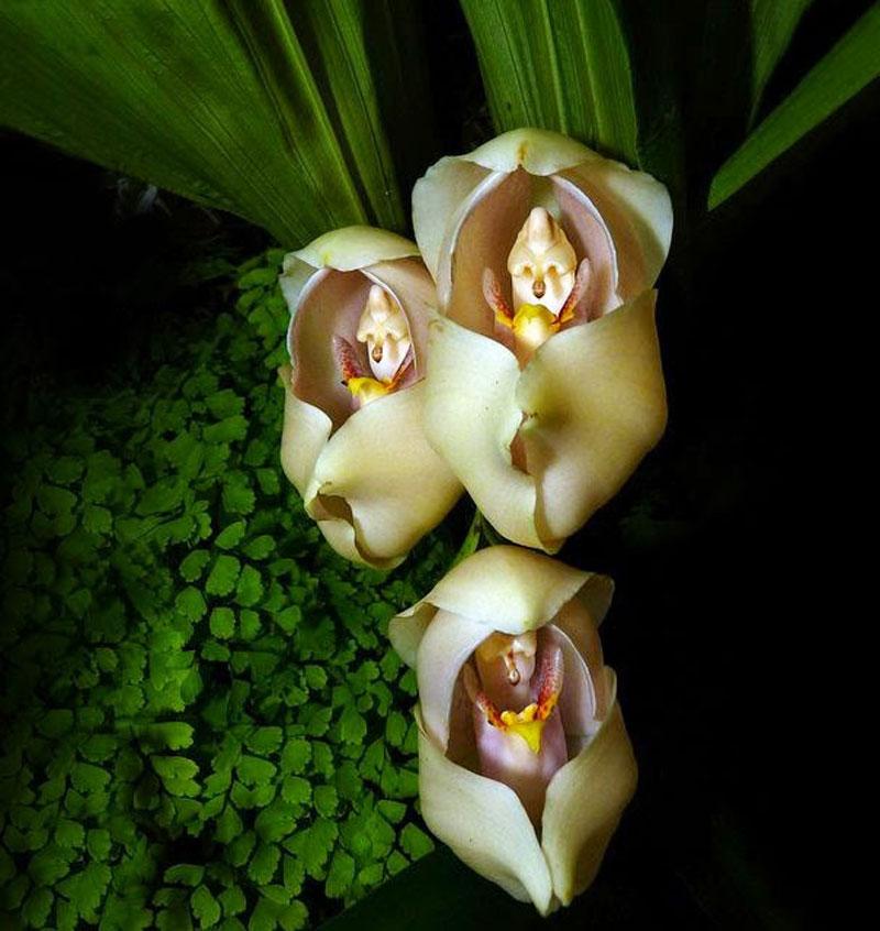 Swaddled-Babies - 8 najpiękniejszych a zarazem najdziwniejszych kwiatów