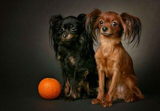 nietypowe rasy psów