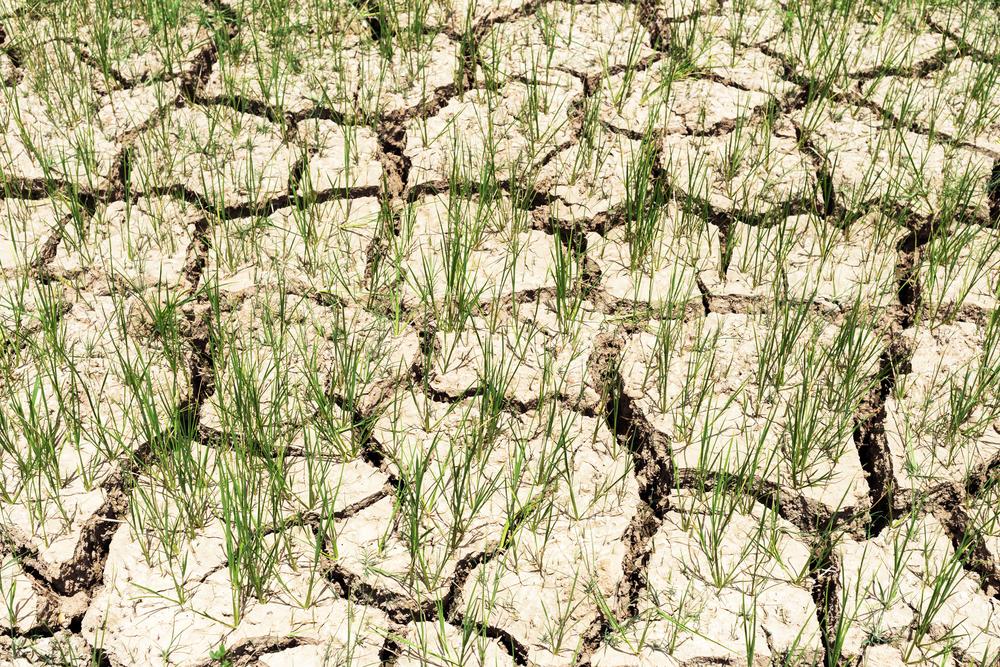 El Nino powoduje opłakane skutki
