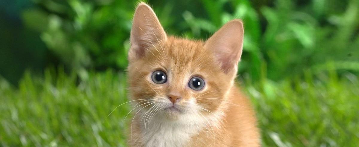 śmieszne filmiki z kotami