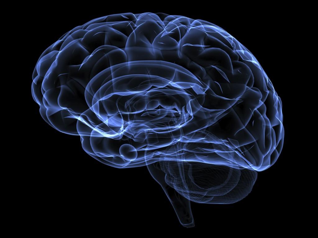 fakty na temat mózgu