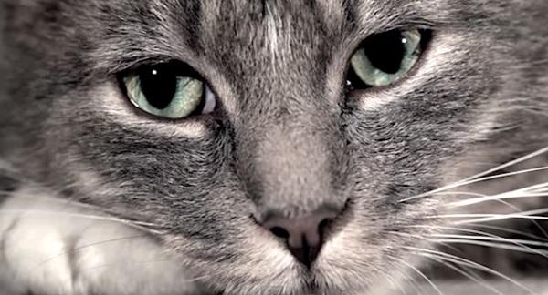 fakty o kotach