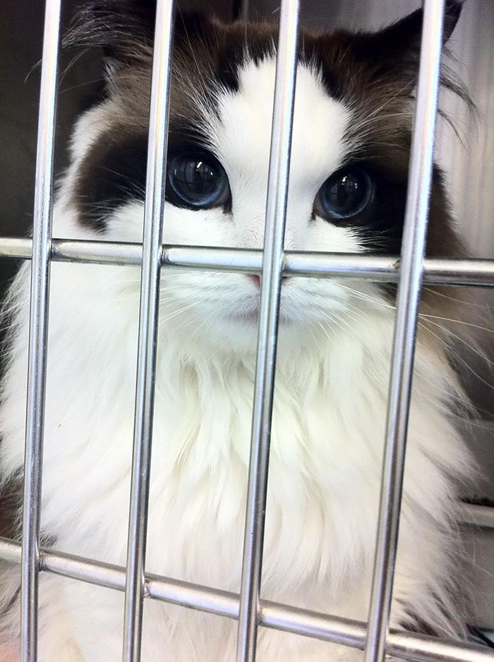 najpiękniejsze koty na świecie