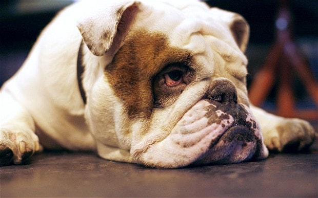 psy dla osób leniwych