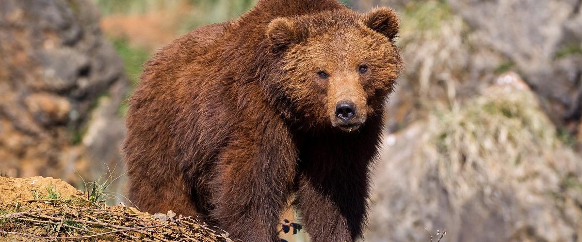 najbardziej niebezpieczne zwierzęta w Polsce
