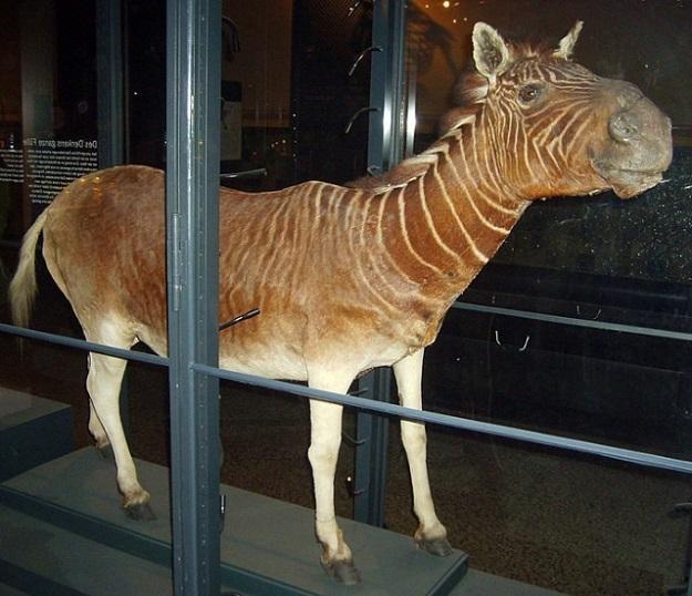 wymarłe gatunki zwierząt