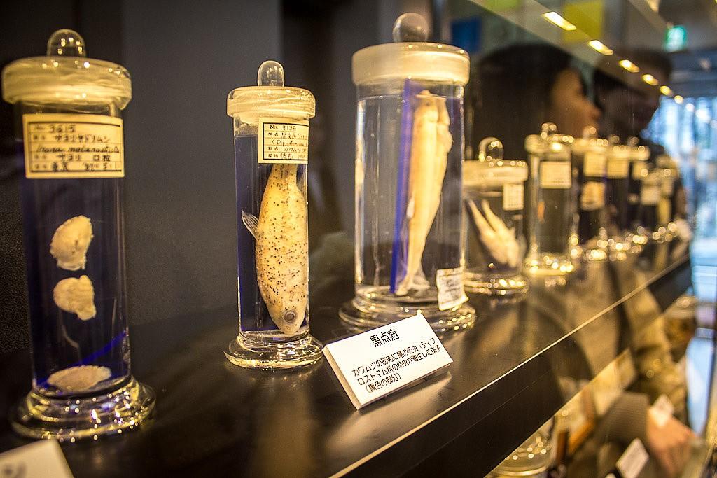 najdziwniejsze muzea