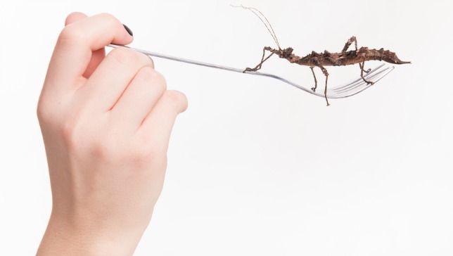 powody, dla których powinniśmy jeść owady