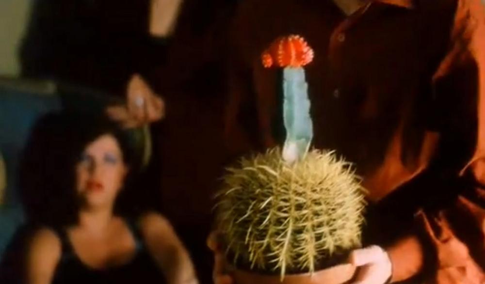 Jaki był kaktus Oskara w filmie