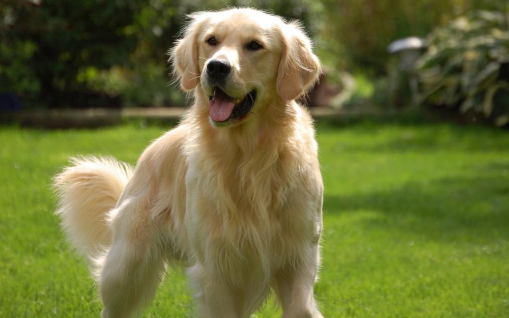 psy nadające się dla dzieci