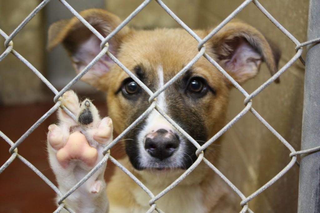 jak pomagać potrzebującym zwierzętom