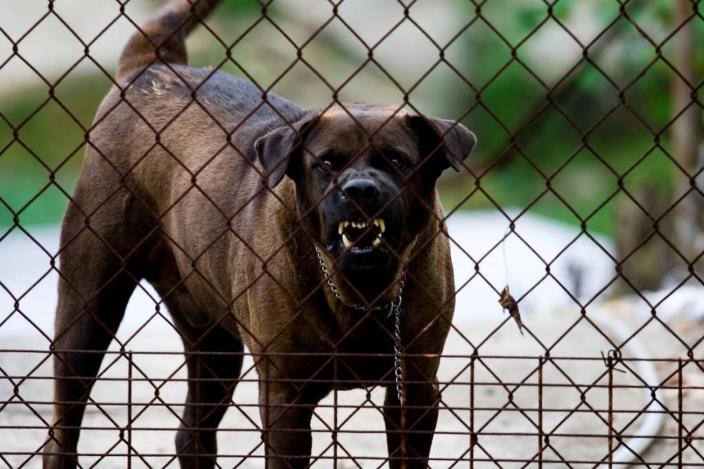 mity na temat psów
