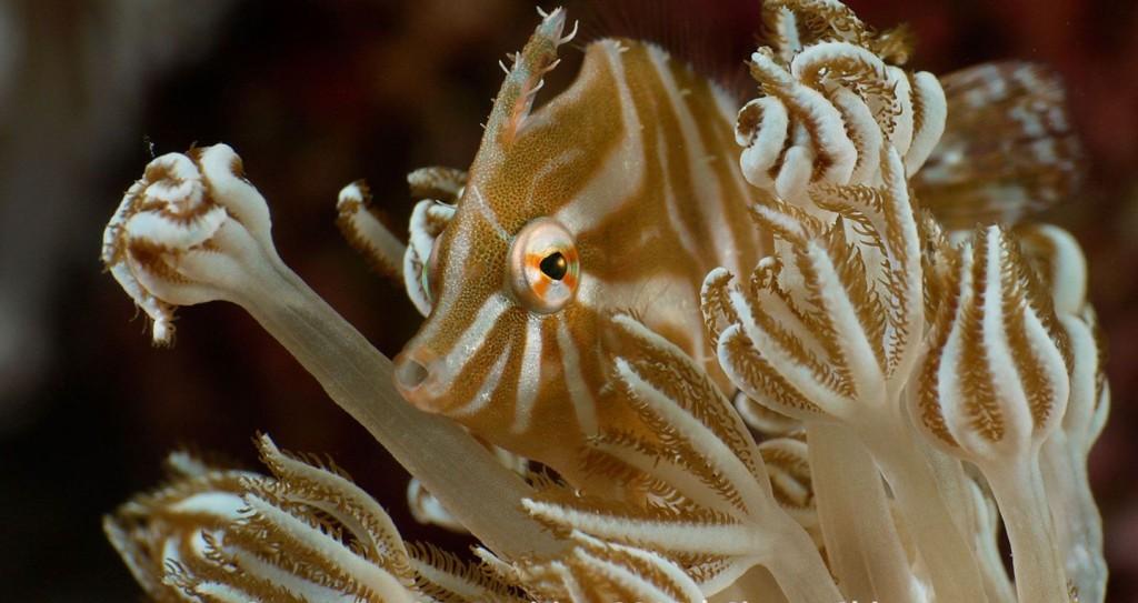 najbardziej niesamowite podwodne fotografie