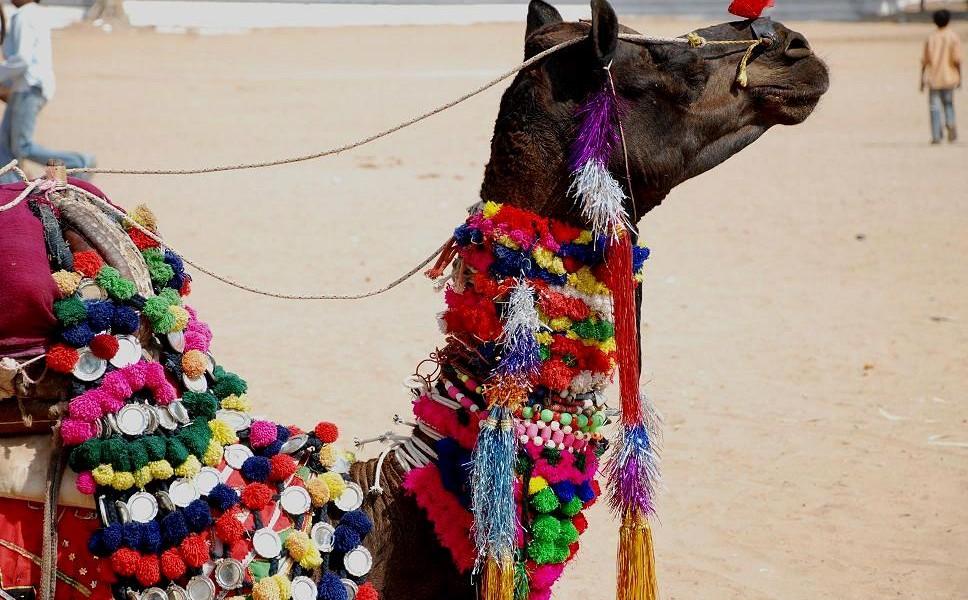 najdziwniejsze festiwale w Indiach