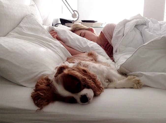 powody, dla których nie powinno się wyrzucać psa z łóżka