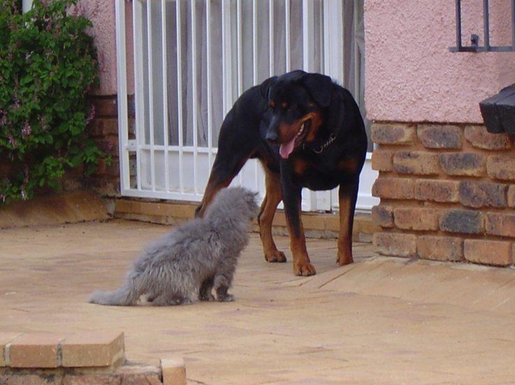 kot pies zaprzyjaźnianie